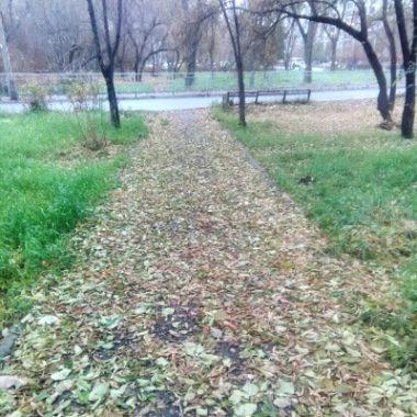 Ковровая дорожка жухлых листьев