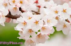 Про месяц май: весна, мир, труд. Победа... Дни рождения